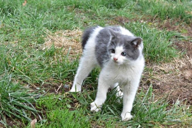 kitten-6-1280x854