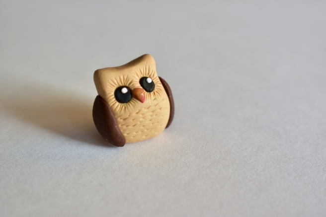 owl-1280x853